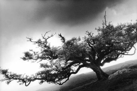 Tree,Peek Hill,Dartmoor,gelatin silver print